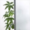 【トレジャーセール青】シンプルパーテーション・半透明・軽量(W800×H1200)